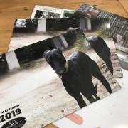 calendario-2019-2